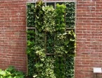 Vertical garden plants for your backyard ideas